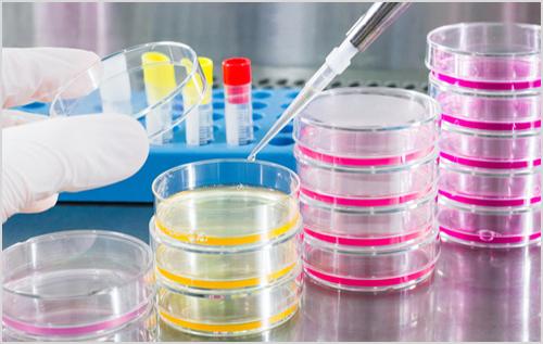 Địa chỉ xét nghiệm Bệnh Mycoplasma ở Tân Bình đảm bảo chính xác nhất?
